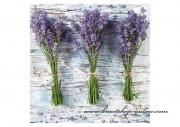 Detail anzeigen - Servietten Lavendel