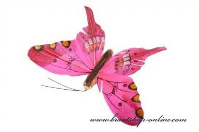 Schmetterling fuchsia