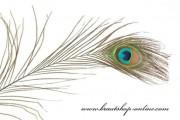 Detail anzeigen - Wunderschöne Pfauenfeder, Länge 70 cm