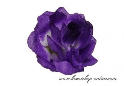 Taftrose violett