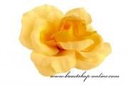 Detail anzeigen - Wunderschöne Taftrose in gelb