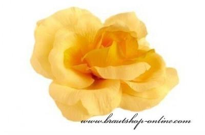Taftrose gelb