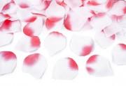 Shooter - Rosenblätter in rosa