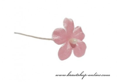 Brautblume rosa