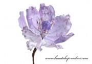 Detail anzeigen - Magnolieblüte weiss-lila