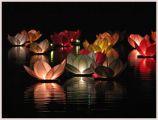 Wasserlaterne Lotus in rot