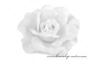 Detail anzeigen - Haarschmuck Rose in weiss