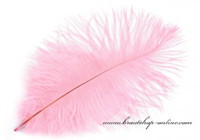 Straussenfeder in rosa