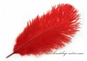 Detail anzeigen - Straussenfeder in rot