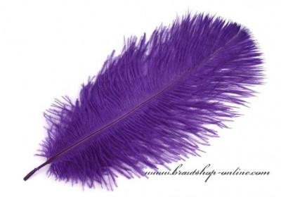 Straussenfeder in violett