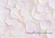 Detail anzeigen - Taftrosenblätter in rosa-hellcreme